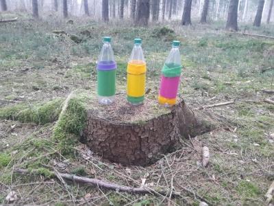 Kindergeburtstag im Wald